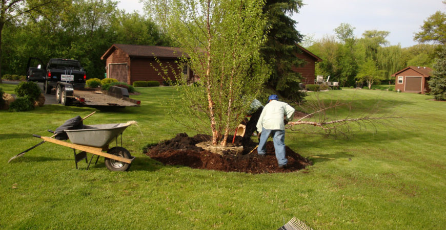 Planting & Removal